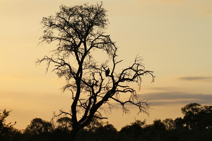sunset knp 1