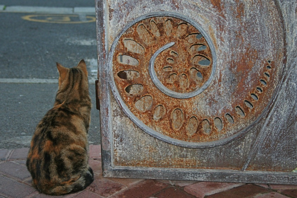 cat at the gatel